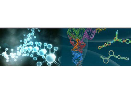 EVRY RNA web service
