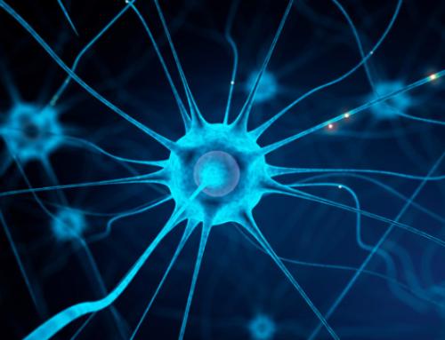 Nouveau sujet de thèse: «Analyse automatique d'images de réseau de microtubules pour la prédiction d'interaction de protéines»