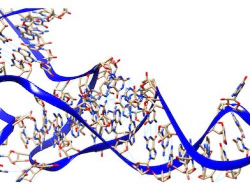 Un outil novateur pour sonder la diversite des ARN non codants